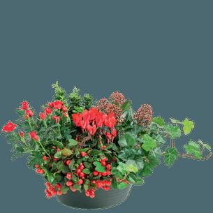 Fleurs deuil Emotion Toussaint