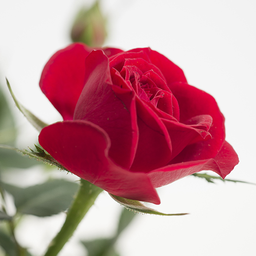 Fleurs deuil Emotion