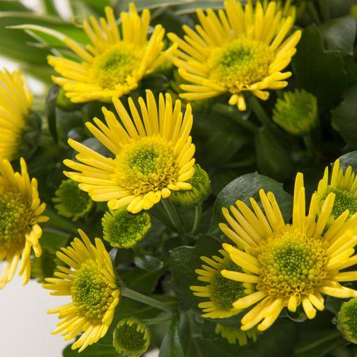 Fleurs deuil Orée