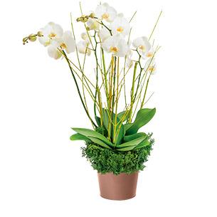 Fleurs deuil Grâce Deuil