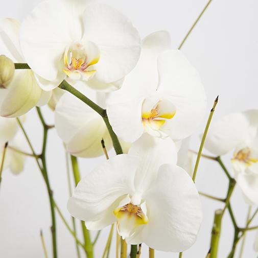 Fleurs deuil Grâce