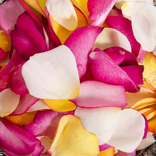Fleurs deuil Pétales du souvenir
