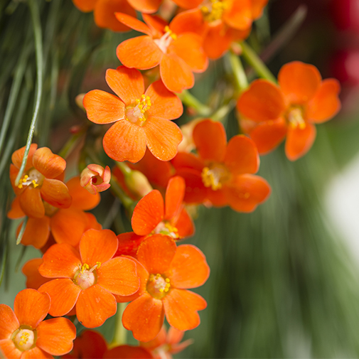 Fleurs deuil Opus