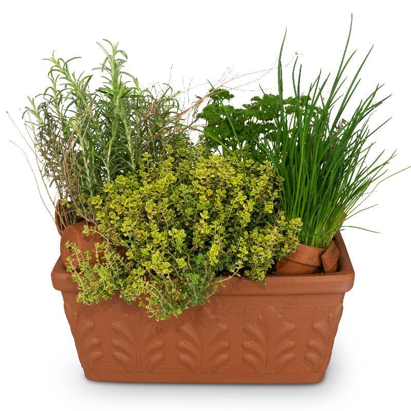 Bouquet de fleurs Herb Box (planted)