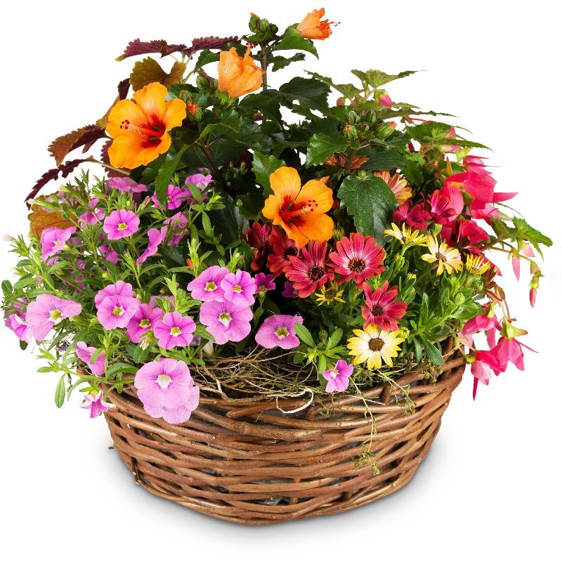 Bouquet de fleurs Delicate Summer Garden