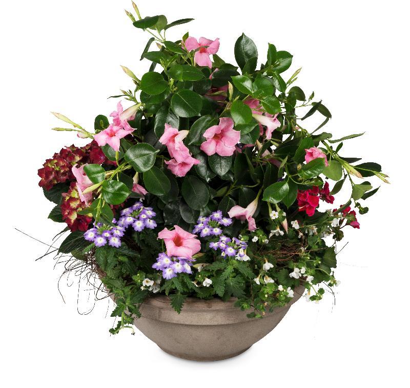 Bouquet de fleurs Plant Paradise