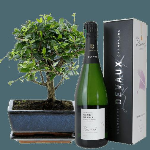 Bouquet de fleurs Bonsai et son champagne