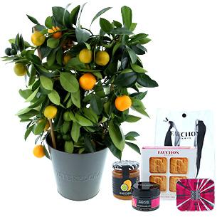 Fleurs et cadeaux Calamondin et son coffret gourmand FAUCHON Anniversaire