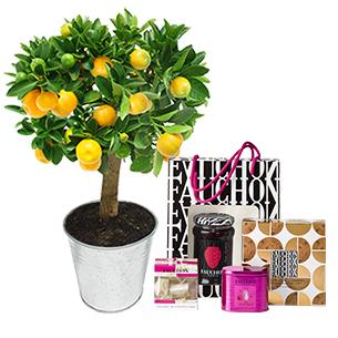 Fleurs et cadeaux Calamondin et son coffret shopping chic FAUCHON