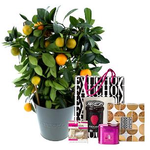 Fleurs et cadeaux Calamondin et son coffret gourmand FAUCHON Collection Hommes