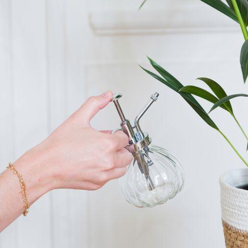 Plantes vertes et fleuries Calathea Orbifolia et son vaporisateur