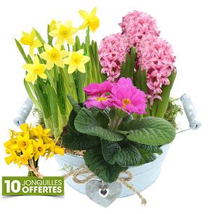 Fleurs et cadeaux Coupe de plantes