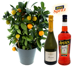 Fleurs et cadeaux Calamondin et son spritz Collection Hommes