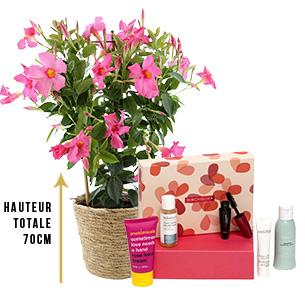 Fleurs et cadeaux Dipladénia et sa box beauté Birchbox Fête des Mères