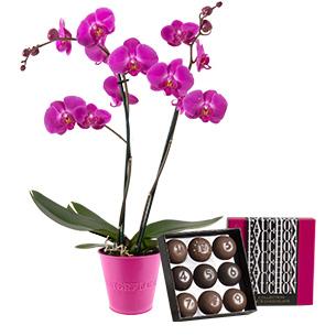 Fleurs et cadeaux Orchidée et son écrin FAUCHON Anniversaire