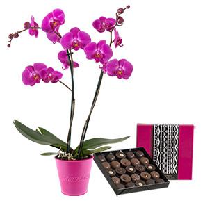 Fleurs et cadeaux Orchidée et son écrin géant FAUCHON Anniversaire