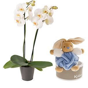 Fleurs et cadeaux Petit prince Kaloo Naissance