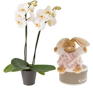 Fleurs et cadeaux Petite princesse Kaloo Naissance