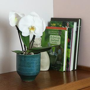 Plantes vertes et fleuries Phalaenopsis Singolo + cache pot Remerciements