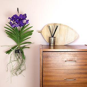 Plantes vertes et fleuries Vanda suspendue Remerciements
