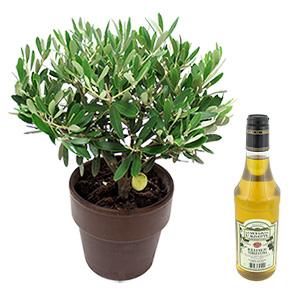 Fleurs et cadeaux Olivier et son huile d'olive Collection Hommes