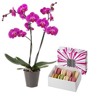 Fleurs et cadeaux Amour de macarons <br>FAUCHON