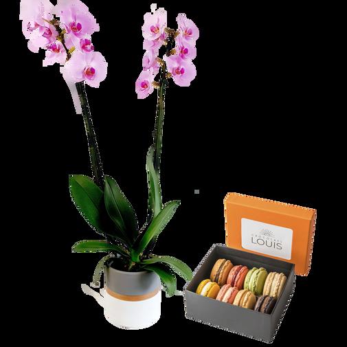 Bouquet de fleurs Phalaenopsis rose et son écrin de macarons Chocolats LOUIS