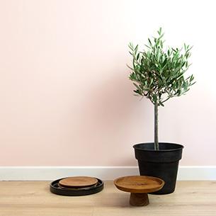 Plantes vertes et fleuries Olivier + cache pot Remerciements
