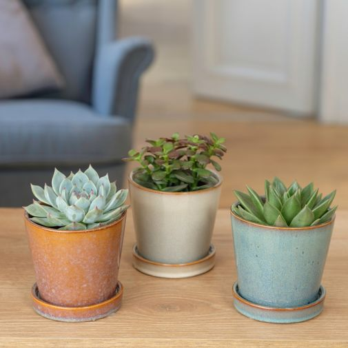Plantes vertes et fleuries Trio de Succulentes