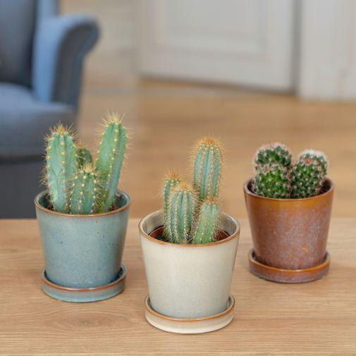 Plantes vertes et fleuries Trio de Cactus et leurs cache-pots