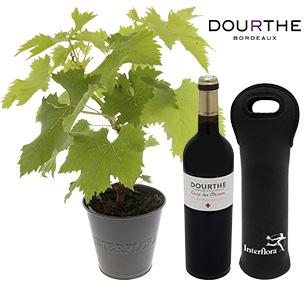 Fleurs et cadeaux Pied de vigne & son St Emilion Dourthe Anniversaire