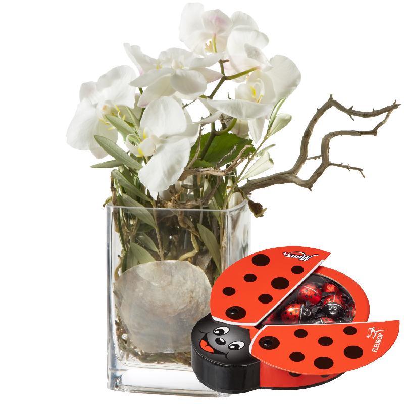 Bouquet de fleurs Best of Luck ... with chocolate ladybird