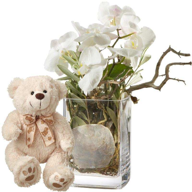 Bouquet de fleurs Mystical Orchids (including vase) with teddy bear (white)