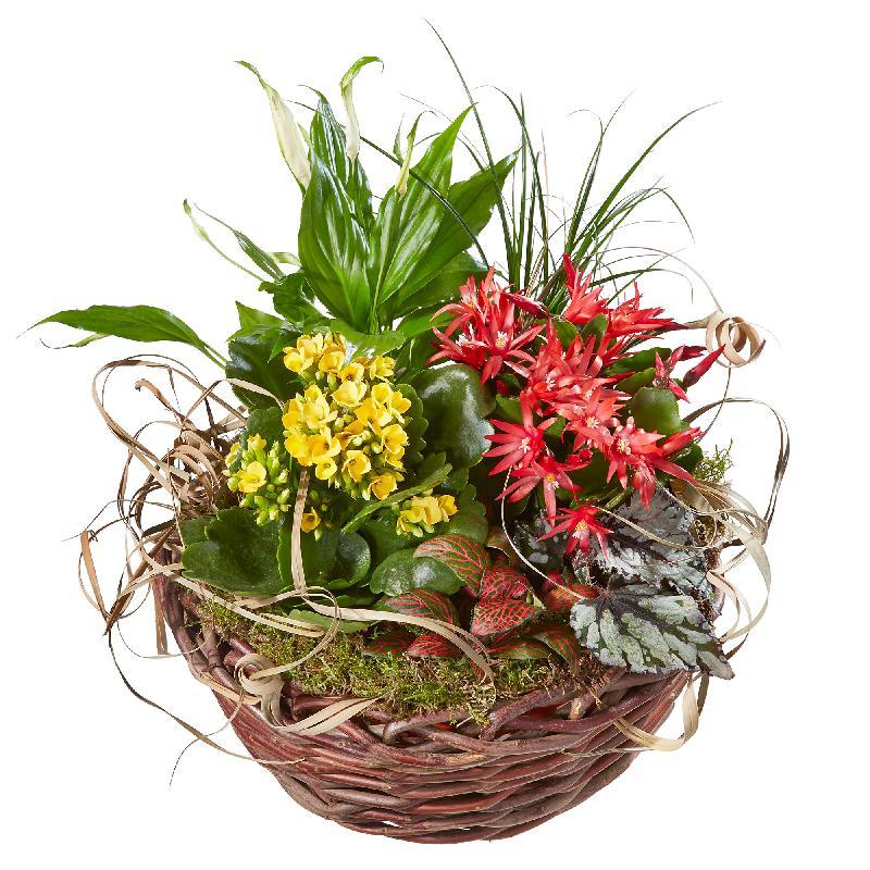 Bouquet de fleurs Bright Indoor Plants in a Basket