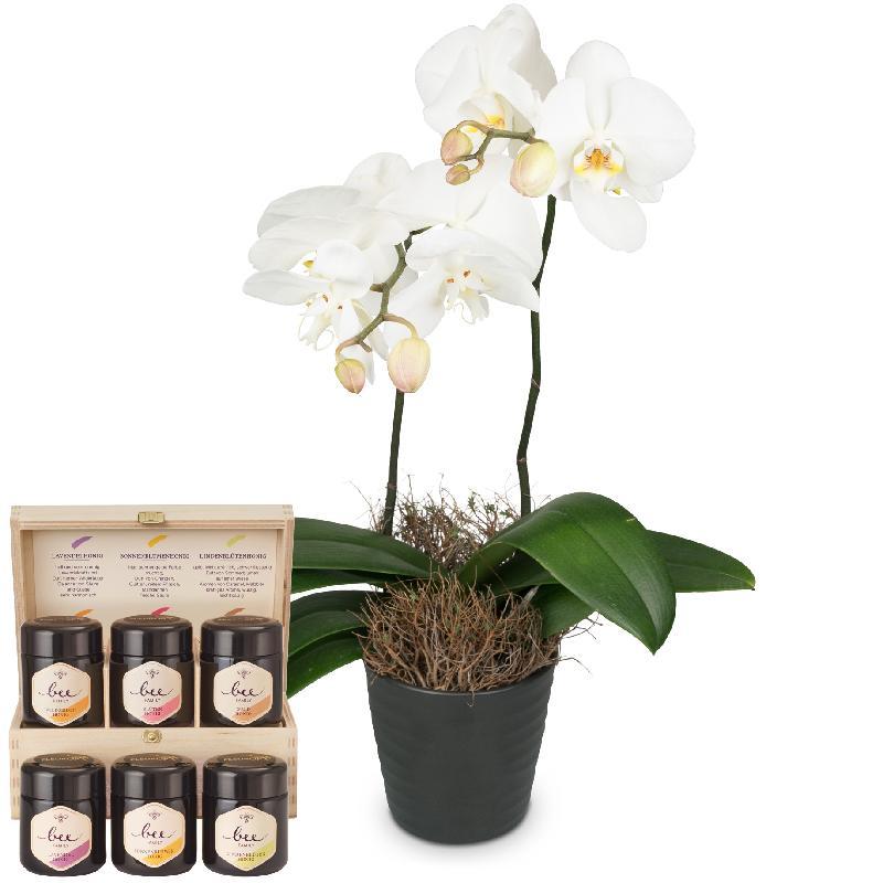 Bouquet de fleurs White Dream (orchid) with honey gift set