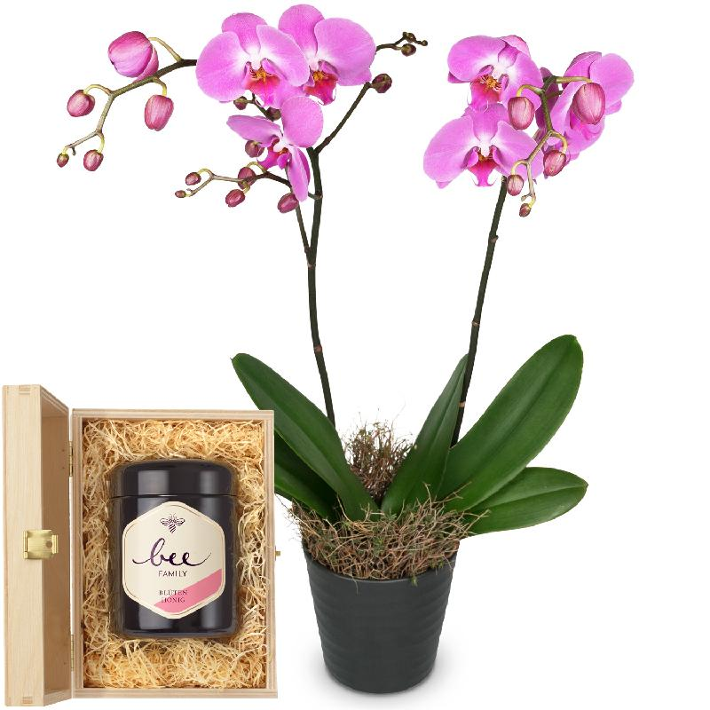 Bouquet de fleurs Pink Dream (orchid) with Swiss blossom honey