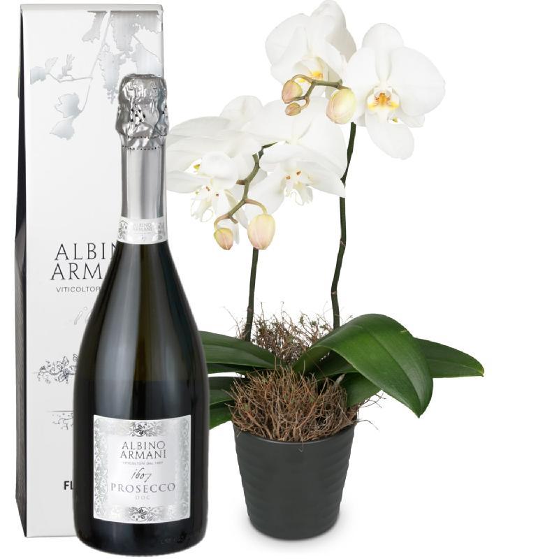 Bouquet de fleurs White Dream (orchid) with Prosecco Albino Armani DOC (75cl)