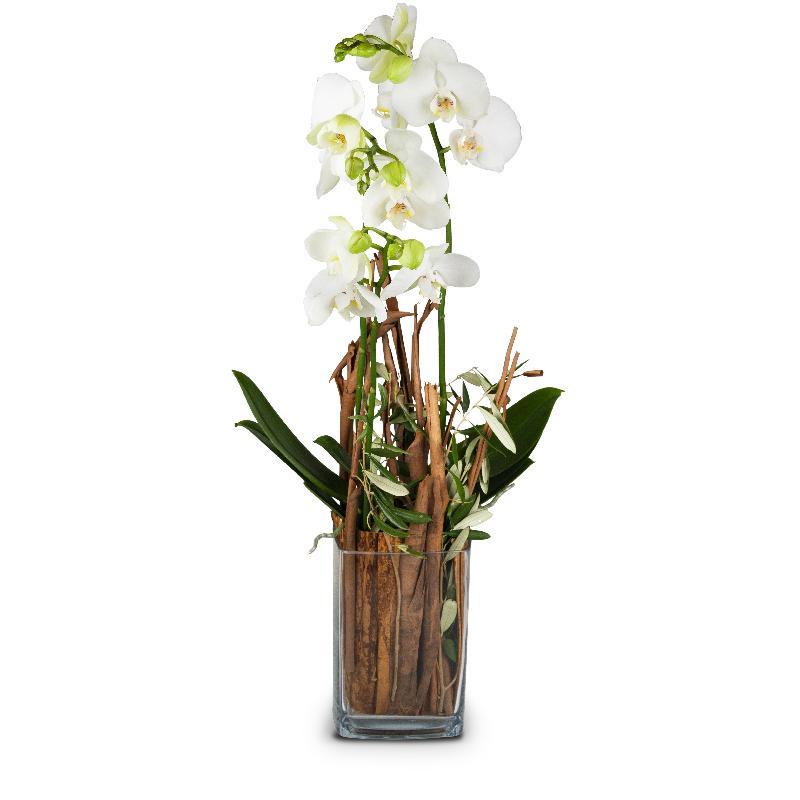 Bouquet de fleurs Magic (orchid with vase)
