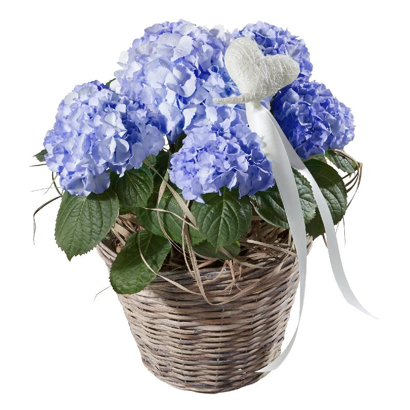Bouquet de fleurs Hydrangea (blue) with Heart