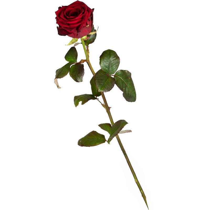 Bouquet de fleurs 1 Red Rose
