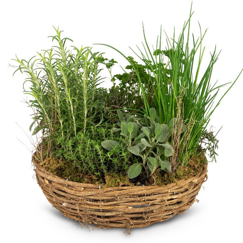 Bouquet de fleurs Little herb garden (planted)