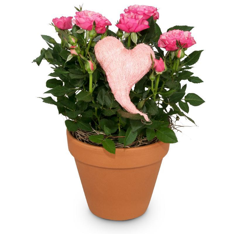 Bouquet de fleurs Heartfelt Surprise (rose plant)