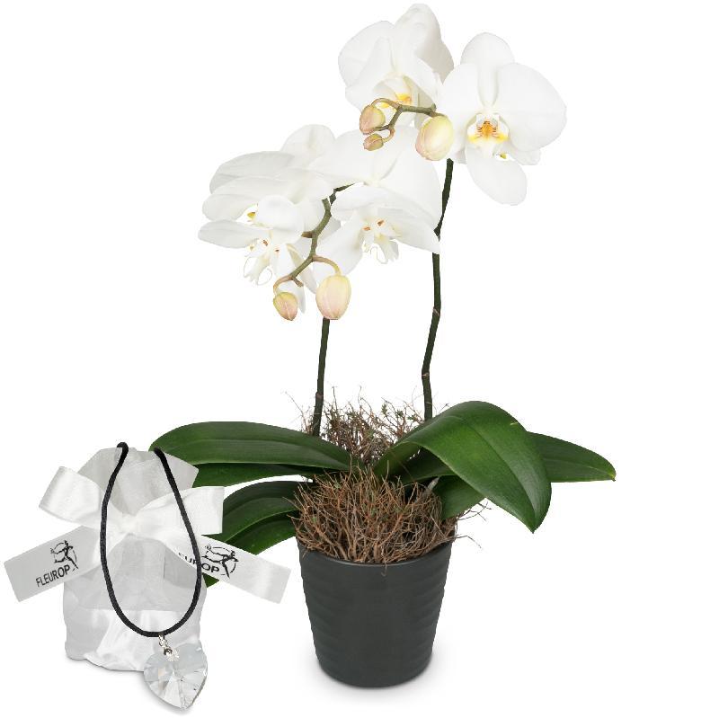 Bouquet de fleurs White Dream (orchid) with Swarovski® crystal heart