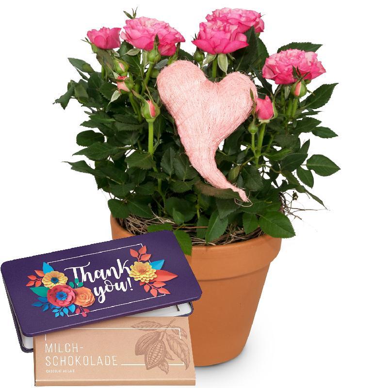 Bouquet de fleurs Heartfelt Surprise (rose plant with heart) with bar of choco