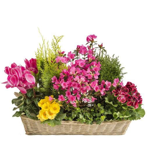 Fleurs deuil Coupe rectangulaire de plantes rose et verte
