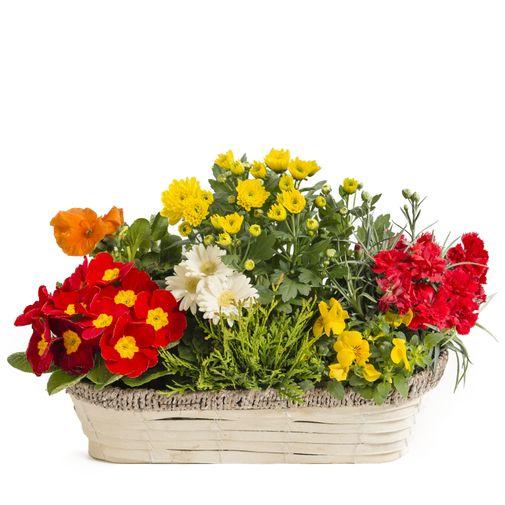 Fleurs deuil Jardinière de plantes fleuries d'extérieures