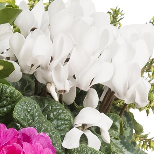 Fleurs deuil Coupe de plantes d'extérieur