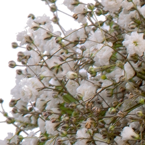 Fleurs deuil Bouquet rond de roses blanches