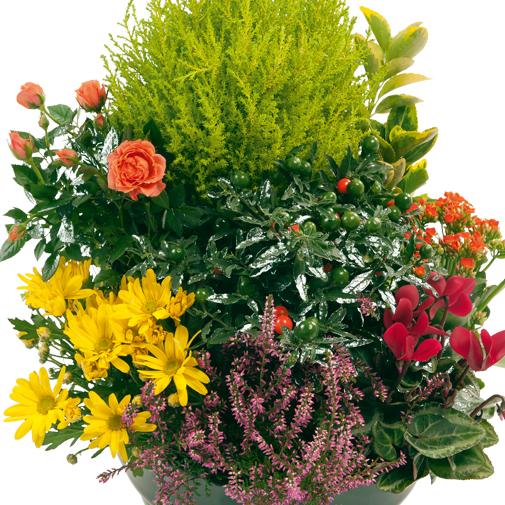 Fleurs deuil Coupe de plantes d'extérieur multicolores