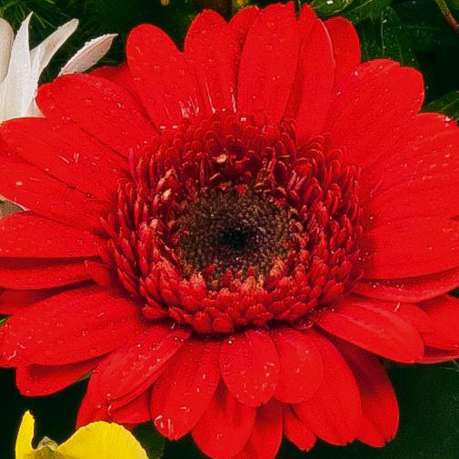 Fleurs deuil Corbeille en longueur multicolore
